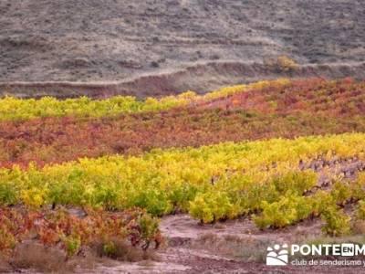 Enología en Rioja - Senderismo Camino de Santiago; senderismo cantabria